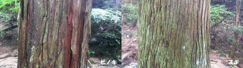 樹皮の比較